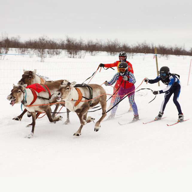 ReindeerWorldCup_1