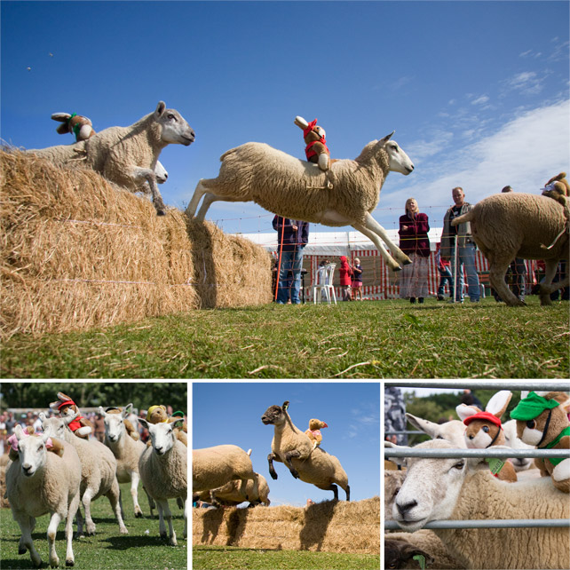 SheepRacing_2