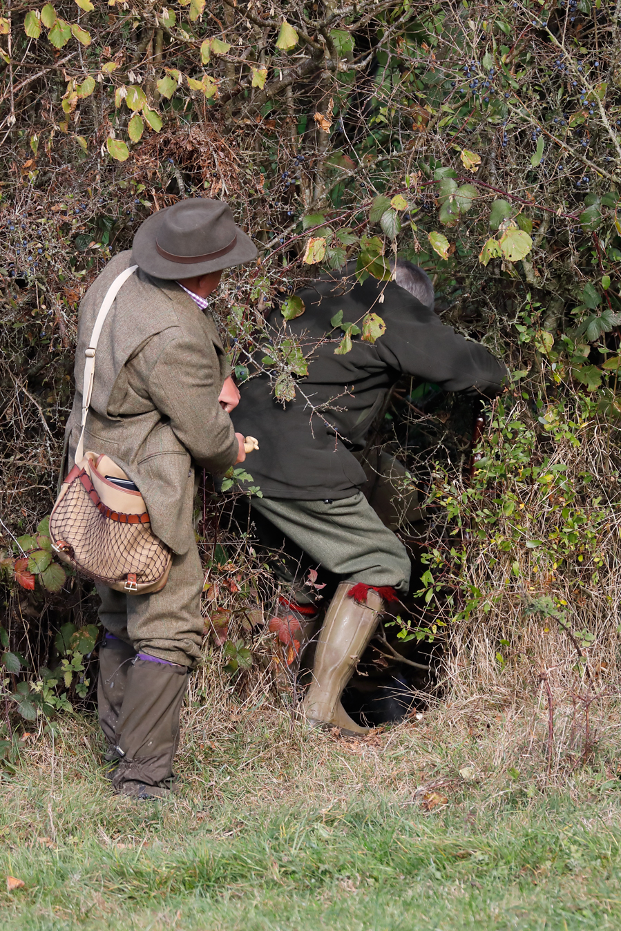 Field sports photography. Field trial judges go to look for pheasant not found by dogs to eye-wipe