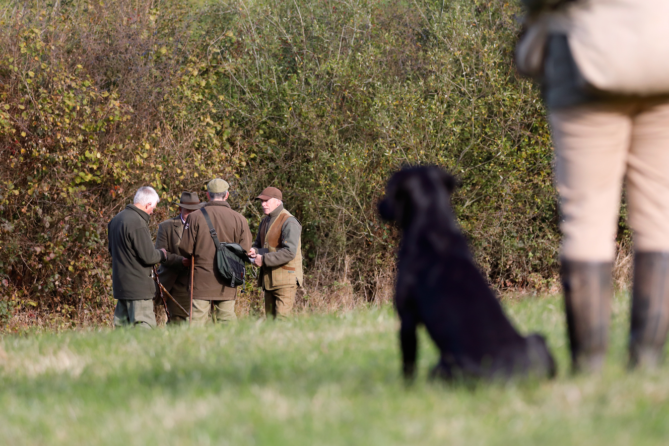 Field sports photography. Field trial judges confer