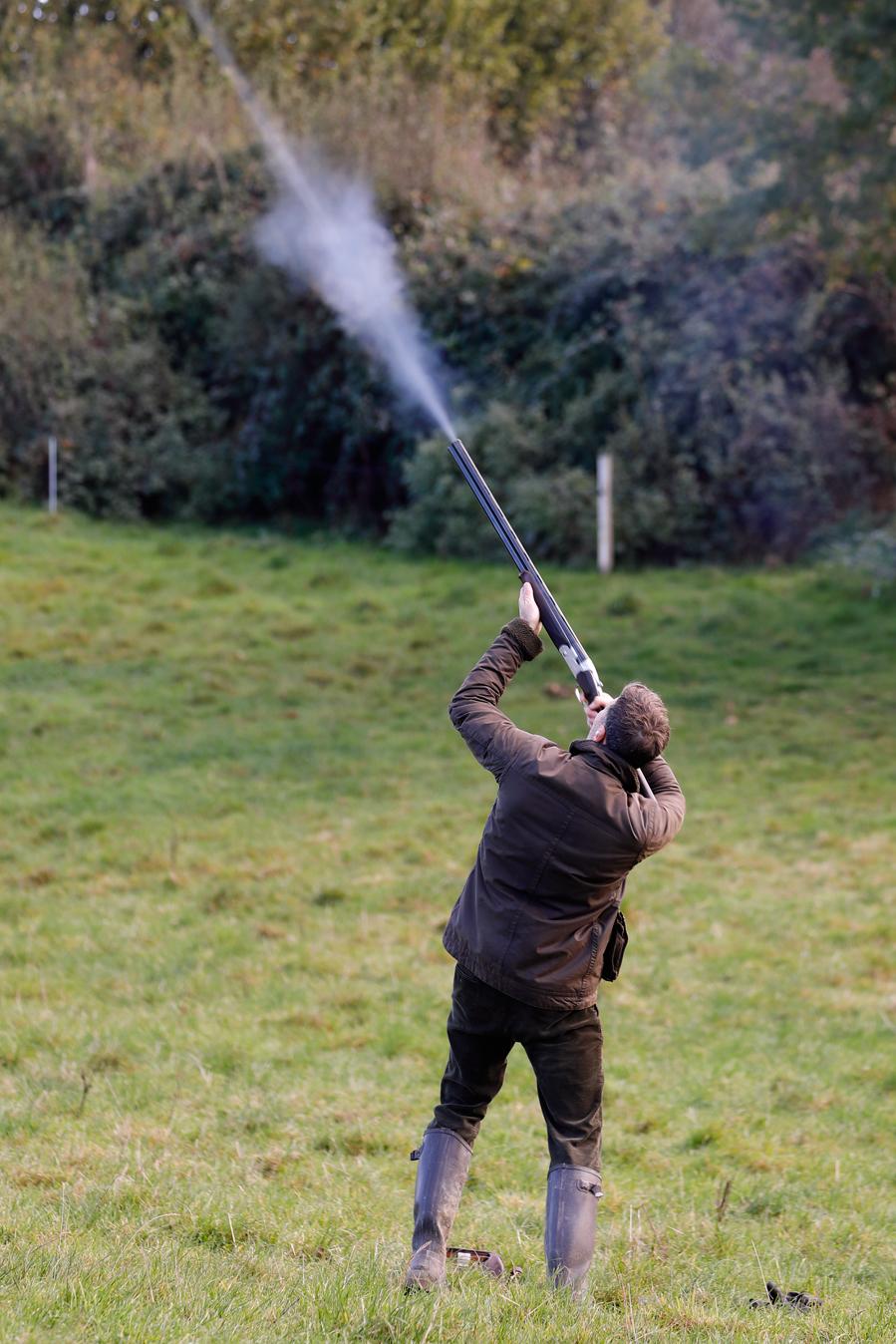 Field sports photography. Gun shoots at driven pheasant